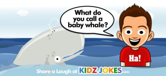 Whale Joke What Do You Call A Baby Whale